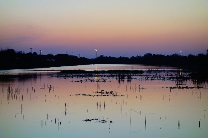 twilight swamp land