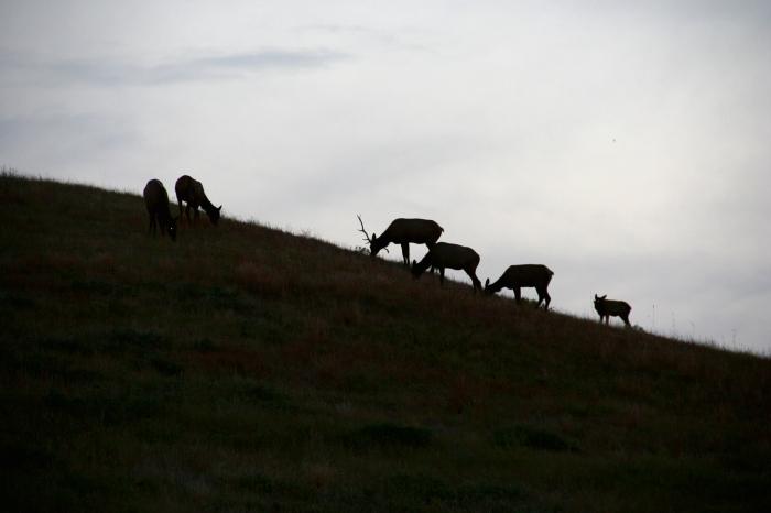deer hill
